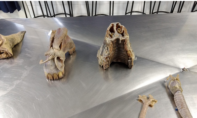 Mesa Digital de Anatomia para Medicina Veterinária
